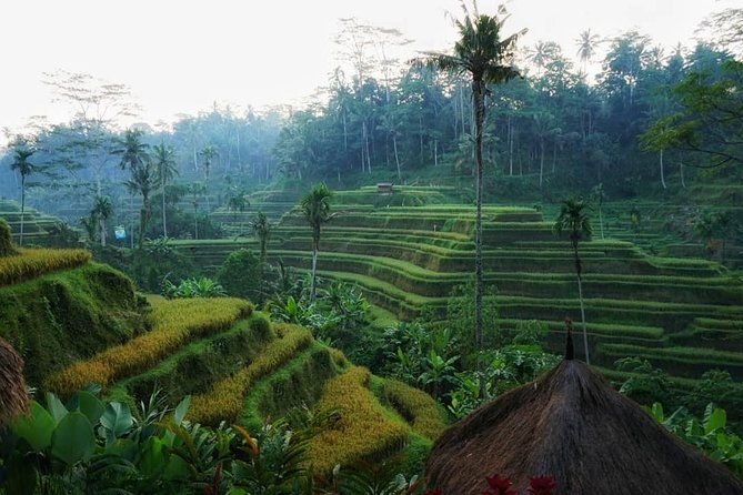 Antungan Village rice field