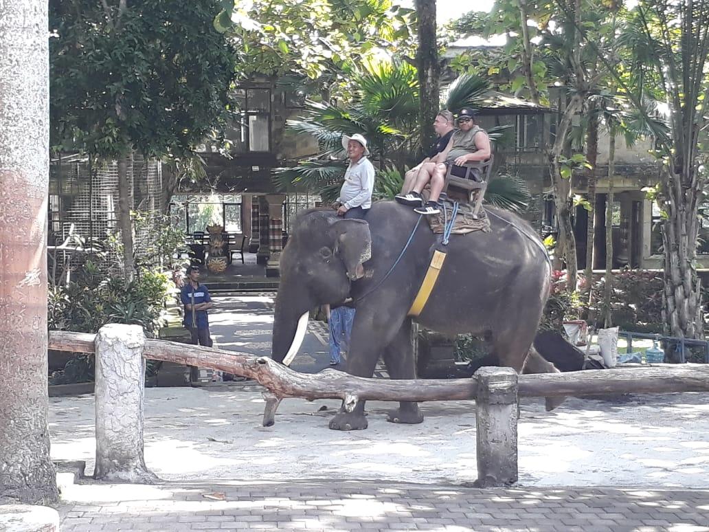 Elephant Safari Ride & Park Access