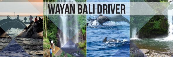 North Bali Dolphin & Waterfall Tour