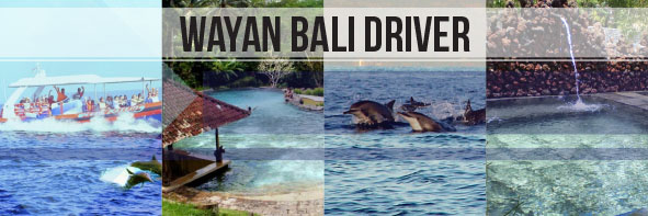 North Bali Dolphin & Hot Spring Tour