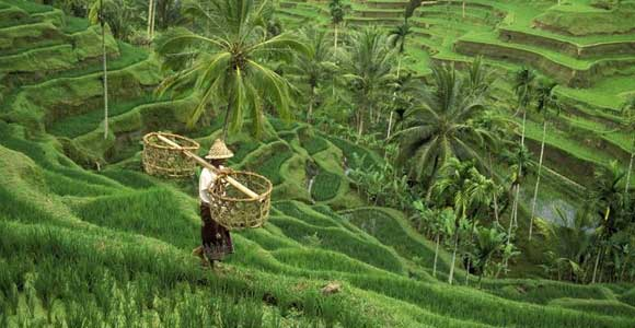 Jatiluwih-Rice-Terrace