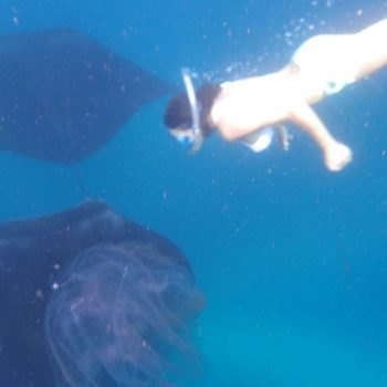 The Beauty of This Giant Manta Is So Perfect