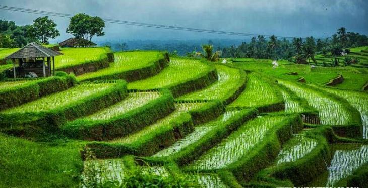 Hidden rice porches 9 Best Adventure in Ubud